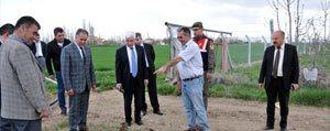 Karaman'da Sakayik Çiçegi Yetistiriciligi
