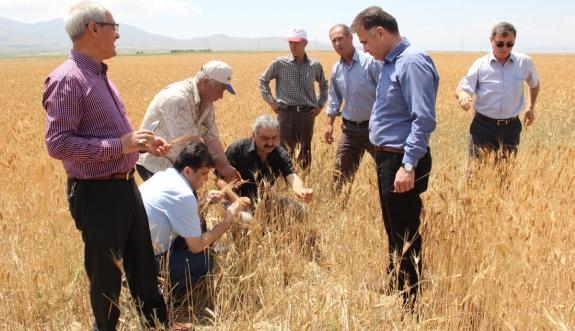Karaman'da Dolu, Tarlada Mahsul Bırakmadı