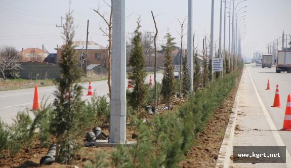 Yeşil Bir Karaman İçin Ağaçlandırma Çalışmaları Devam Ediyor