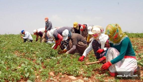 Mevsimlik Tarım İşçileri Bürosu Kuruldu