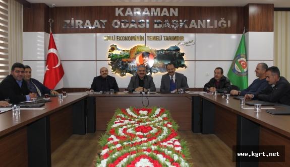 Karaman'daki Zeytin Üreticileri İçin Kooperatifleşme Çalışmaları