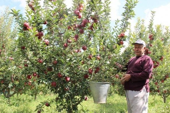 Karaman Elmasının Pazarlama Sorunu Elma Borsası İle Çözülecek