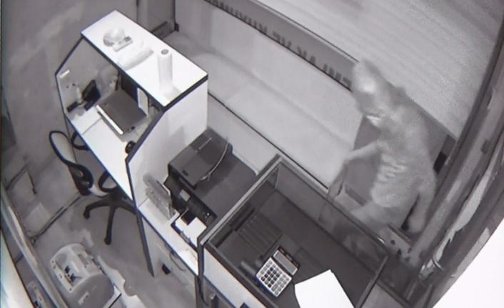 Emlak Ve Kuyumculuk Dükkânındaki Hırsızlık Güvenlik Kamerasında
