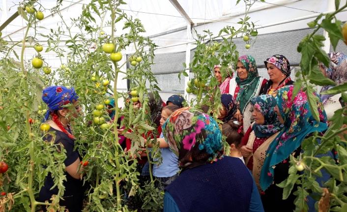 Sarıveliler'de Gıda Üretimine Kadın Eli Değiyor