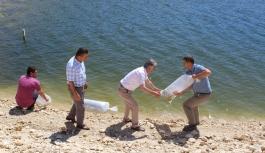 Göletlerin Balıklandırma Çalışmaları...