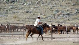 Karaman'da Yılkı Atları Yakalanmaya...