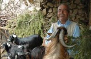 Keçi Inadina DNA'li Çözüm
