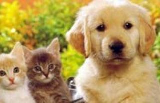 Tüm Kedi Ve Köpeklere Kimlik Ve Pasaport Sarti