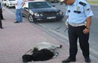 Kazayla Keçisini Öldüren Kisiyi Öldürmeye Kalkti
