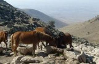 Karadag'in Ekoturizme Kazandirilmasi Projesi Sona...