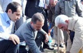 Ayranci Ayrandede Hatira Ormani'na Fidan Dikildi