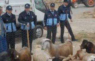 Karaman'da Kurban Satis Ve Kesim Yerleri Belirlendi