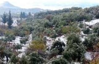 Mut'a 10 Yil Aradan Sonra Kar Yagdi