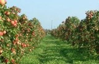 Karaman 2014 Yilinda Elma Üretiminde Ikinci Oldu