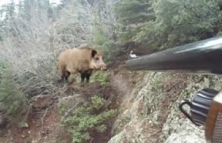 Domuz Avına Çıkan Köylü Ölü Bulundu