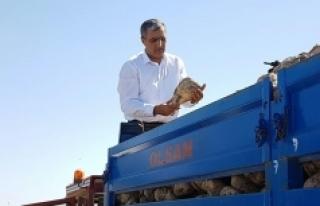 Konya Şeker'de Pancar Ödemeleri Başlıyor