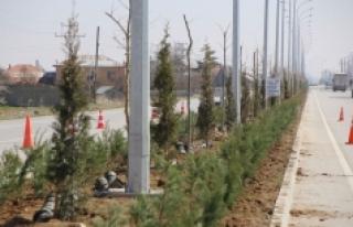 Yeşil Bir Karaman İçin Ağaçlandırma Çalışmaları...