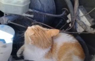 Ambulansın Kaputuna Giren Kedi, Karaman'dan...