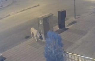 Karaman'da Esnafı Önce Kızdıran Sonrasında...