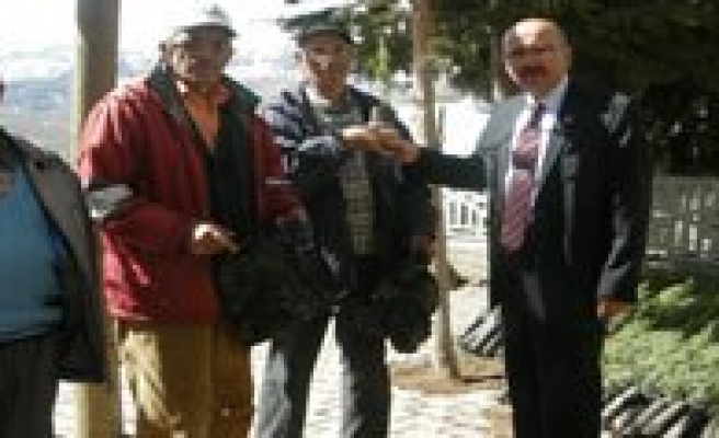 Sariveliler Belediyesi 2 Bin Katran Fidani Dagitti
