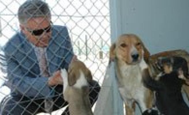Sokak Köpekleri Için Barinak Açildi