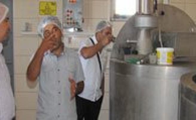 Divle Obruk Peyniri Hakkinda Arastirma Çalismasi Yapildi