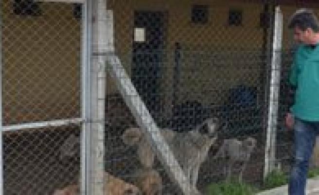 Belediye Hayvan Barinagi 250 Köpege Ev Sahipligi Yapiyor