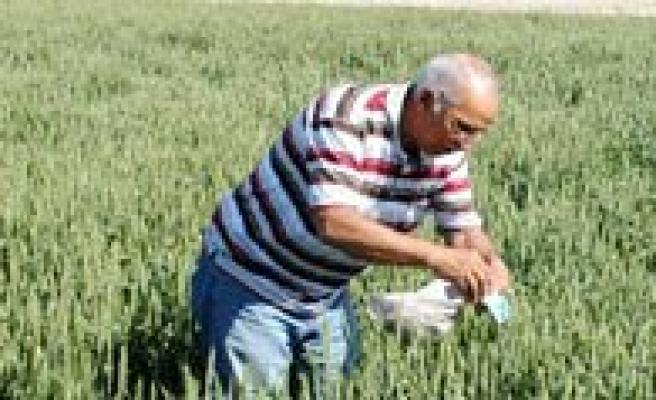 Süneye Karsi 11 Köyde Faydali Böcek Salimi Yapildi