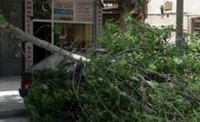 Rüzgar Nedeniyle Kirilan Agaç Dali Yolu Kapatti