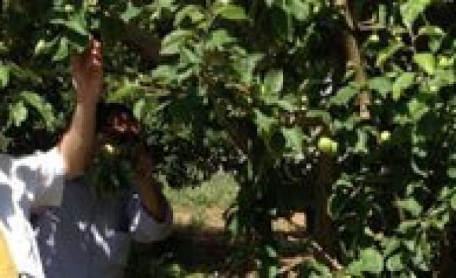 Meyve Bahçelerinde Don Zarari Ödemesi Basvurulari Için Son Tarih 8 Temmuz