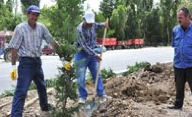 Karaman Belediyesi Yemyesil Bir Karaman Için Çalisiyor