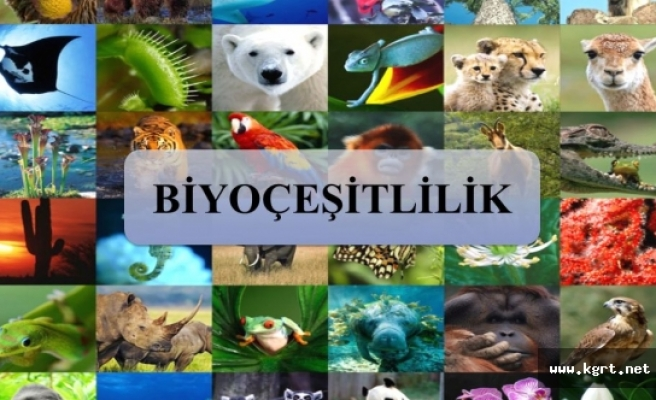 Biyoçeşitlilik Ve Tarımsal Kalkınma Konulu Söyleşi Yapılacak