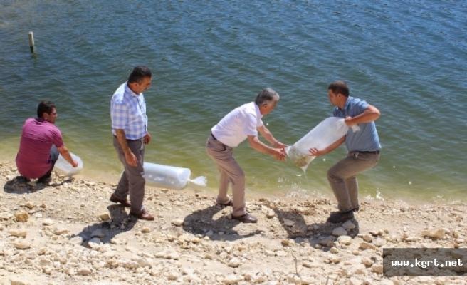 Göletlerin Balıklandırma Çalışmaları Sürüyor