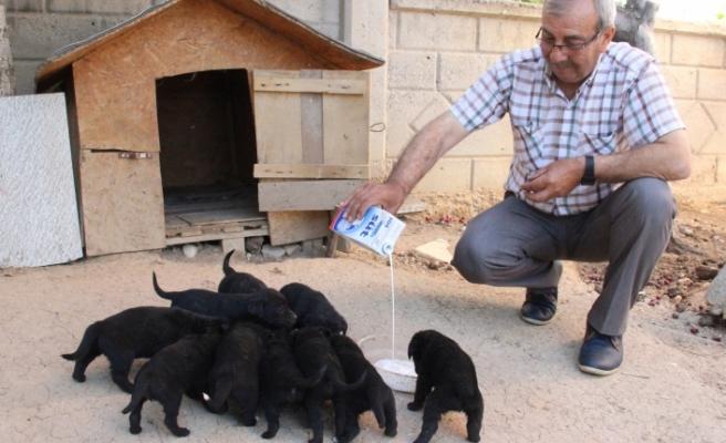 Anneleri Kaybolan 10 Köpek Yavrusu Ortada Kaldı
