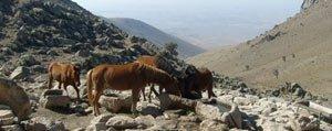 Karadag'in Ekoturizme Kazandirilmasi Projesi Sona Eriyor