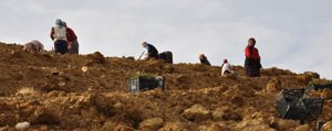 Çevlik Göleti`nde Agaçlandirma Çalismalari Sürüyor