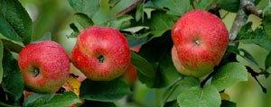 Taseli Meyve Yetistiriciligi Analiz Edilecek