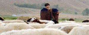 Çobanlar Için `Sosyal Güvence` Çalismalari