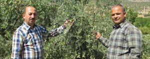 Öztiryaki: Zeytinyagi Primi Tesvigi Için Bakanliga Gerekli Yazismalari Yaptik