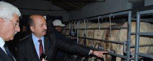 Kasoba Köyünde Küçükbas Hayvanlar Için Süt Sagim Platformu Tanitildi