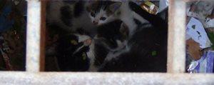 Itfaiye, Yavru Kediler Için Seferber Oldu