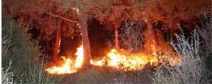 Ihmal Ve Dikkatsizlik Yasam Kaynagi Ormanlarimizi Yakiyor