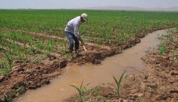 Elektrik Borcu Olan Çiftçilere Tarımsal Destekleme Ödemesi Yapılmayacak
