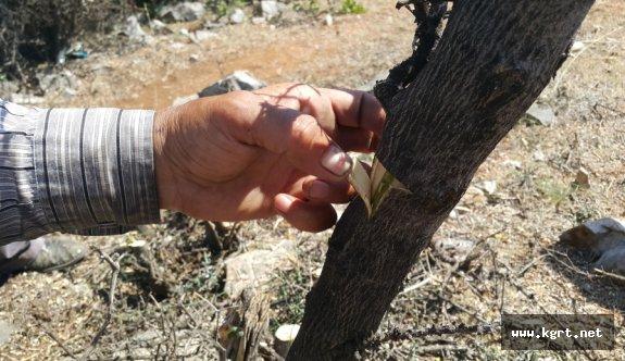 Orman Ve Su İşleri Bakanlığı Karaman'da Orman Köylüsüne Destek Olmaya Devam Ediyor