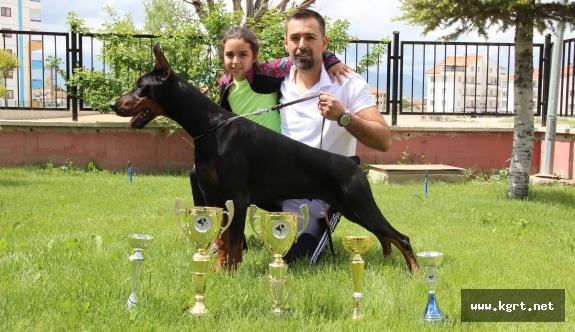 Bianca, Dünya Doberman Şampiyonasına Hazırlanıyor