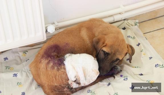 Yavru Köpekler Duyarlı Vatandaşlar Sayesinde Ölmekten Son Anda Kurtarıldı