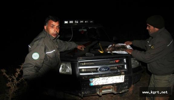 Karaman'da Far Avı Yapanlara 21 Bin Lira Para Cezası