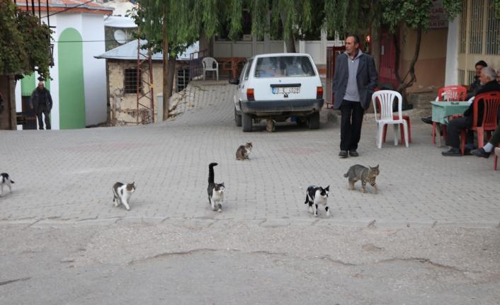 Kedilerin Meydan Nöbeti, Köylüye Balıkçıyı İşaret Ediyor