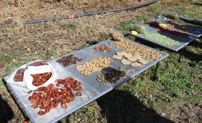 Zengen Köyünde Sebze Kurutma Projesi Tanıtıldı