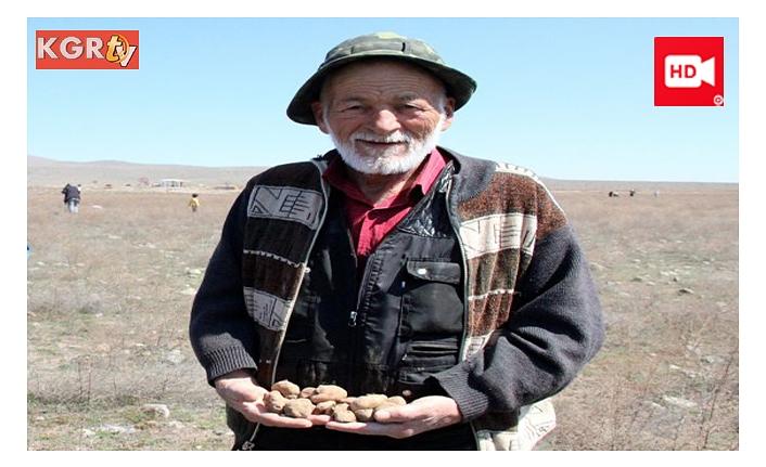 Dolaman Mantarı İçin Genci Yaşlısı Bastonunu Alan Araziye Koşuyor